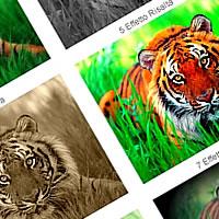 Programma Per Modificare Immagini Gratis: PicNik Software Online